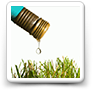 Lawn Watering Tips: Better Results and Less Water